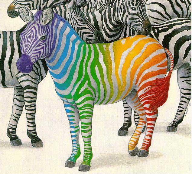 zebrasf